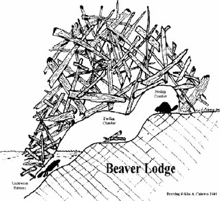 Beaver lodge diagram - photo#8